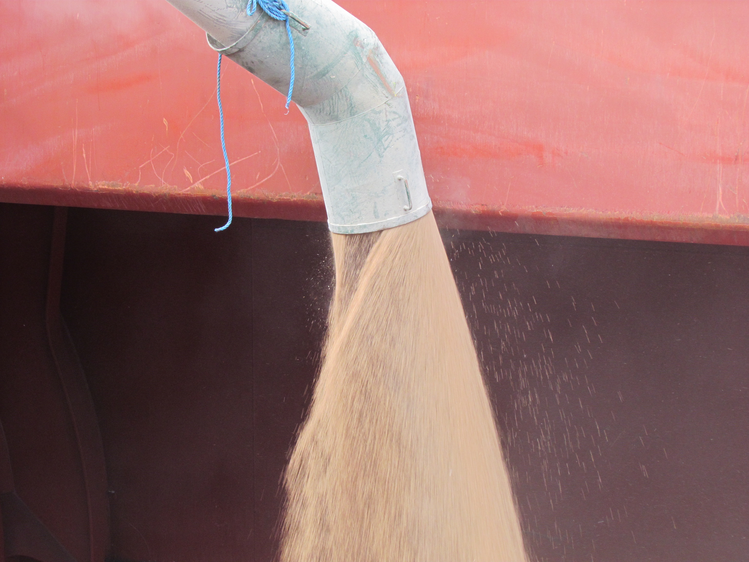 Close up, pouring wheat into an empty hatch.